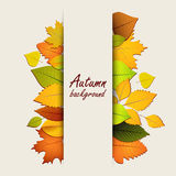 Autumn leaves on a light background Stock Photos