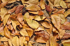 Autumn Leaves. Light and Details of Autumn Leaves Stock Photo