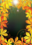 Autumn Leaves Light Frame_eps. Illustration of autumn leaves with light Stock Images