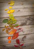Autumn leaves lined in a circle Royalty Free Stock Image