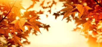 Autumn leaves lit by sunlight - sun rays Stock Images