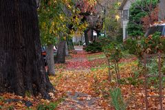 Autumn leaves littering suburb sidewalk, beautiful mess. Thousands of autumn leaves fallen from sweet gum trees littering the street and sidewalks in a quiet Royalty Free Stock Photography
