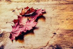 Autumn leaves loose on a wooden board. Toned photo Royalty Free Stock Photos