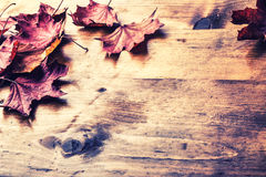 Autumn leaves loose on a wooden board. Toned photo Royalty Free Stock Photo