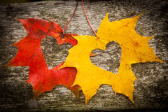 Autumn leaves and love hearts. Love hearts on colorful autumn leaves with wooden background royalty free stock images