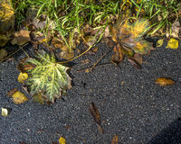 Autumn leaves lying on the asphalt road Royalty Free Stock Photos