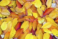 Autumn leaves lying in the faded Stock Photography