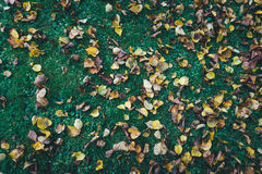 Autumn Leaves Lying On a grama imagens de stock