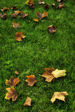 Autumn leaves lying on grass Royalty Free Stock Images