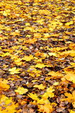 Autumn leaves lying on the ground Royalty Free Stock Image