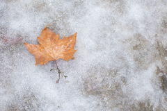 Autumn leaves lying on the ice Royalty Free Stock Photos