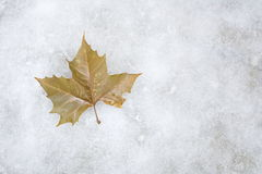 Autumn leaves lying on the ice Stock Image