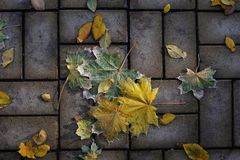 Autumn leaves lying on the pavement lit by the setting sun Stock Photography
