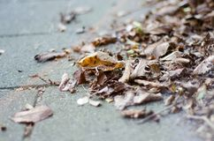 Autumn leaves lying on the street Royalty Free Stock Photo