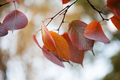 Autumn leaves macro view. October park scene. Selective focus. Shallow depth of field. Stock Image
