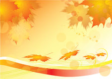 Autumn leaves of maple Stock Image