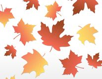 Autumn Leaves [maple] Royalty Free Stock Photo