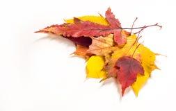 Autumn Leaves Maple, abedul, álamo, castaña, cereza salvaje, rowa Foto de archivo