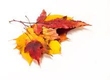 Autumn Leaves Maple, abedul, álamo, castaña, cereza salvaje, rowa Imagen de archivo
