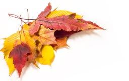 Autumn Leaves Maple, abedul, álamo, castaña, cereza salvaje, rowa Imagenes de archivo