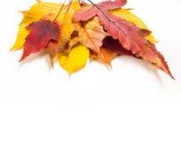 Autumn Leaves Maple, abedul, álamo, castaña, cereza salvaje, rowa Fotografía de archivo