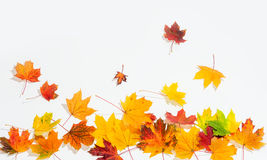 An autumn leaves Royalty Free Stock Images