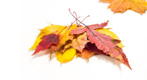 Autumn Leaves Maple, birch, poplar, chestnut, wild cherry, rowa Stock Image