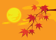 Autumn leaves. Maple autumn leaves on branches Royalty Free Stock Photography