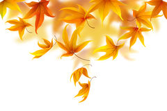 Autumn leaves. Autumn maple leaves falling and spinning on white background, vector illustration Royalty Free Stock Photo