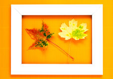 Autumn leaves of maple in frame Stock Photography