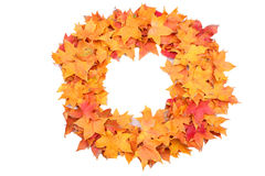 Autumn leaves Maple material Stock Image