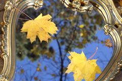 Autumn leaves of a maple on a mirror in sky reflexion. Reflexion in a mirror of yellow sheet of a maple against the dark blue sky Stock Images