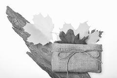 Autumn leaves of maple tree lay near bark of tree. royalty free stock photos