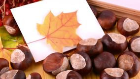 Autumn leaves, maple, viburnum, pine cone, acorn and nut on wooden texture background with empty copy space on photo frame stock video footage