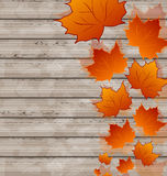 Autumn leaves maple on wooden texture Stock Image