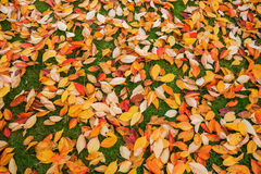 Autumn leaves on a meadow Stock Photography