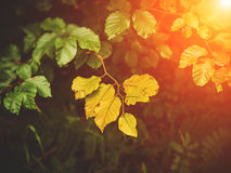 Autumn Leaves mit Sonnenstrahl Lizenzfreie Stockfotos