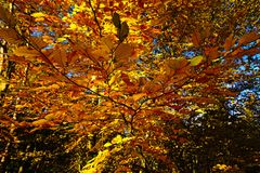 Autumn leaves. In a mixed woodland Royalty Free Stock Photography
