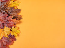 Autumn Leaves on modern trend orange background. For Fall, Thanksgiving, or Halloween holiday backgrounds Stock Photo