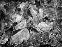 Autumn Leaves monochrome Photo stock