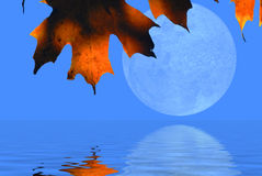Autumn Leaves and Moon Stock Photo