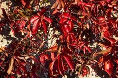 Autumn leaves in morning light Stock Photo