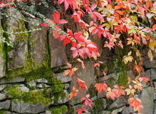 Autumn Leaves And Moss Covered Stone Fence Stock Photography