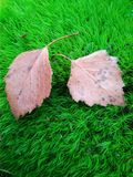 Autumn leaves moss nature falls asleep stock image