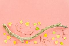 Autumn leaves and mossy tree branch on pink background Royalty Free Stock Image