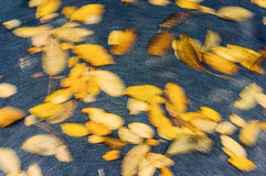 Autumn leaves in motion Royalty Free Stock Photography