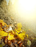 Autumn leaves and mushrooms in the forest Royalty Free Stock Images