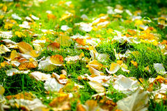 Autumn Leaves na grama Fotografia de Stock Royalty Free