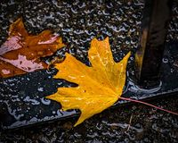 Autumn Leaves na porta Foto de Stock Royalty Free