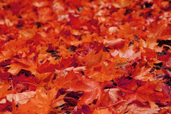 autumn leaves natural background Stock Photography